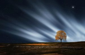 Nachts allein im Strahlenwald