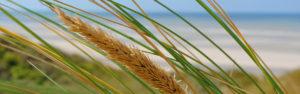 Synonym für Landwirtschaft